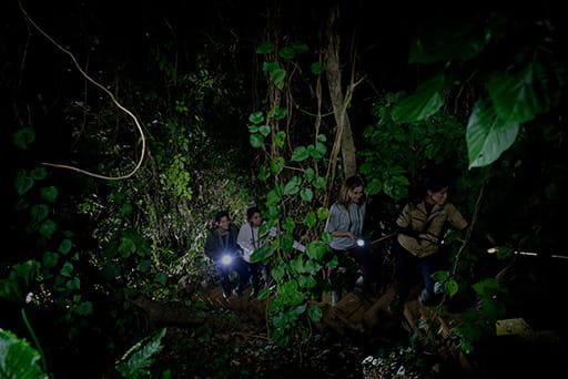 夜のジャングル探検 ウワーガージャングル