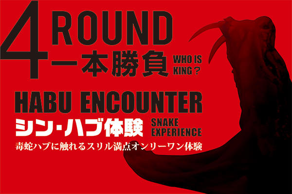 Habu encounter