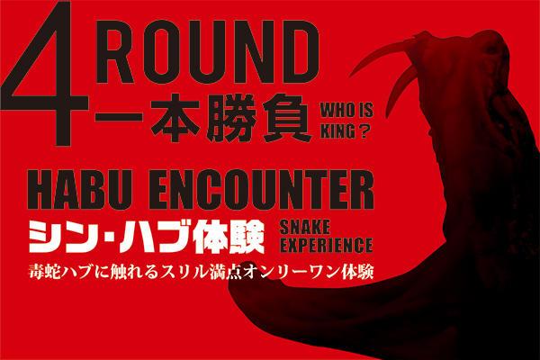 Habu encounter